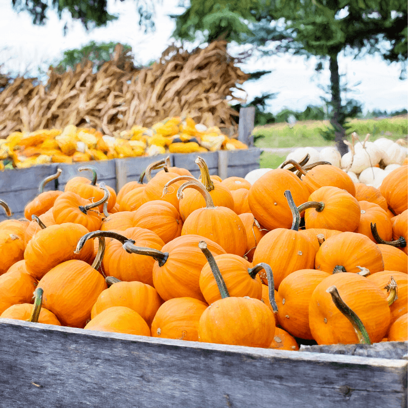 pumpkin patch supplies